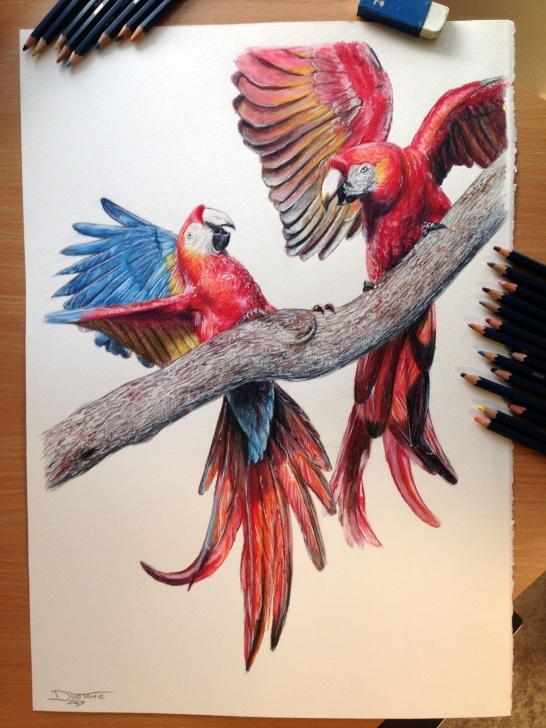 Inspiration Amazing Colored Pencil Drawings Tutorials Aras Color Pencil Drawing By Atomiccircus.deviantart On Images