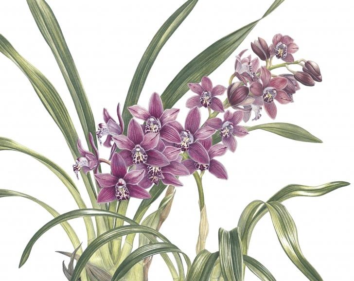 Inspiration Ann Swan Botanical Artist Step by Step Day 4 - Ann Swan Photos