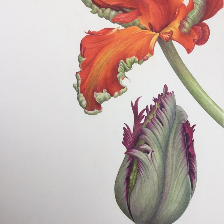 Inspiration Ann Swan Botanical Artist Techniques for Beginners Creative Colour Mixing At Nature In Art - Ann Swan Images