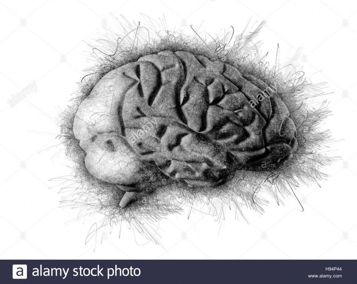 Inspiration Brain Pencil Drawing Ideas Brain Artistic Pencil Sketch Drawing Stock Photo: 126109652 - Alamy Photos