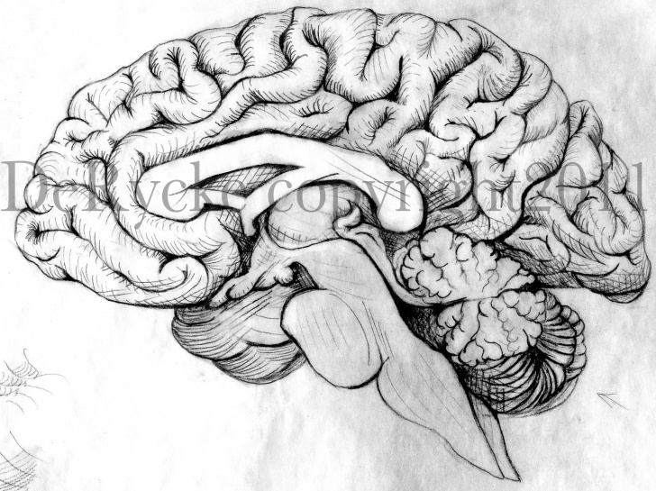 Inspiration Brain Pencil Drawing Ideas Brain Pencil Drawing At Paintingvalley | Explore Collection Of Pic