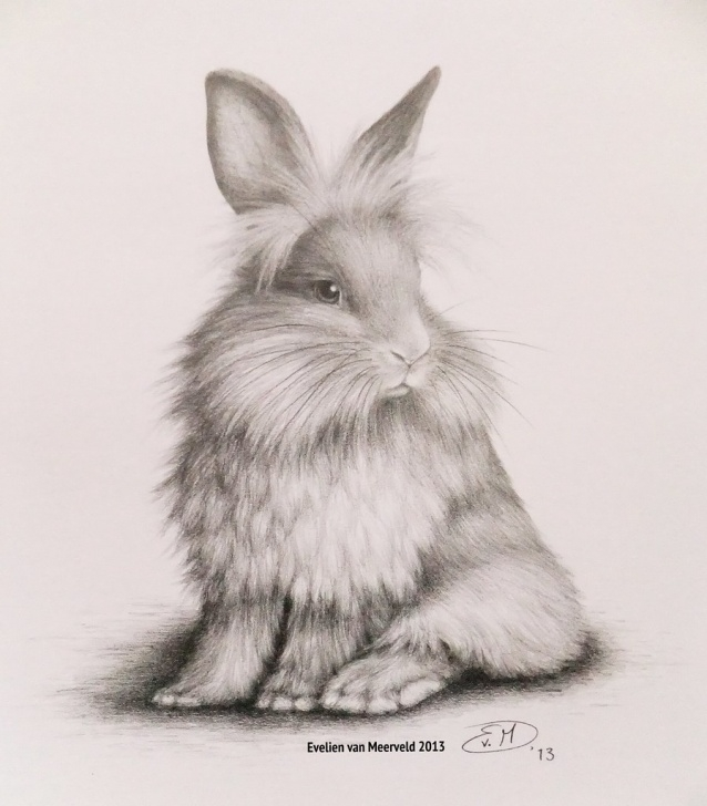 Inspiration Bunny Pencil Drawing Free Bunny | Graphite Pencil Drawing. - - - Nl: Konijntje. Grafie… | Flickr Images