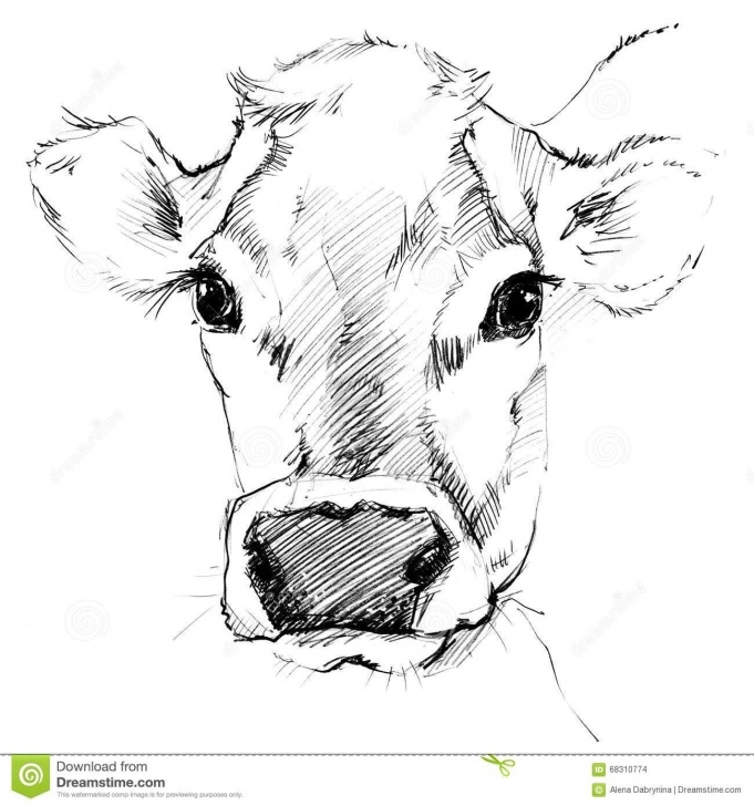 Inspiration Cow Pencil Sketch Step by Step Cow Pencil Sketches Pencil Drawing  | Diy/crafts | Cow Drawing Pictures