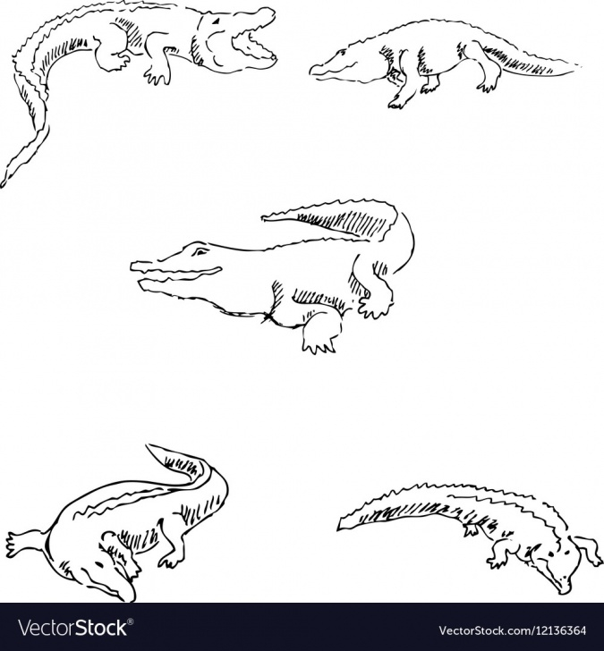 Inspiration Crocodile Pencil Drawing Techniques for Beginners Crocodiles Sketch Pencil Drawing By Hand Vector Image Image