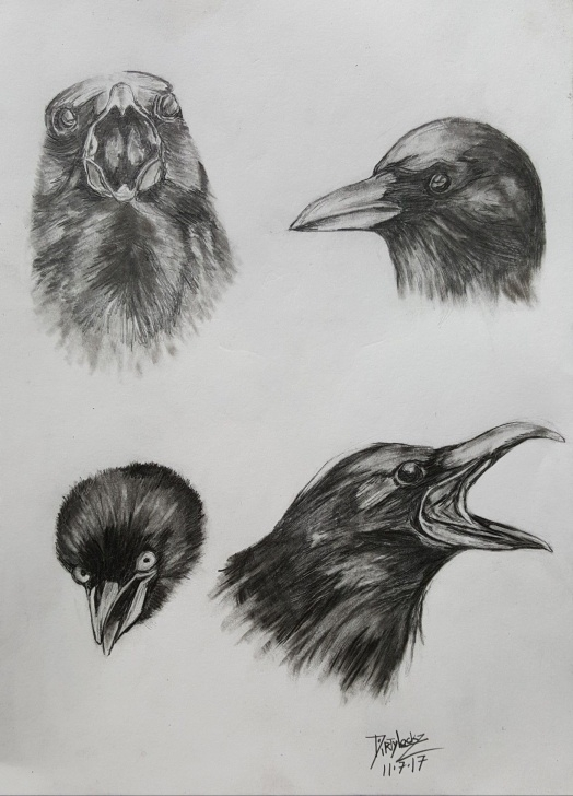 Inspiration Crow Pencil Drawing Tutorials Crow Pencil Drawing | Pencil Art In 2019 | Pencil Drawings, Pencil Image