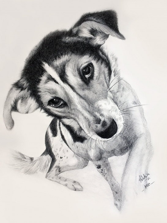 Inspiration Dog Pencil Sketch Lessons Custom Pet Portrait Dog Pencil Sketch Portrait Drawing Loved Cat Portrait  Animal Lover Portraits Personalized Charcoal Drawing From Photo Picture