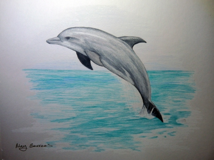 Inspiration Dolphin Pencil Drawing Tutorials Pencil Drawings Of Dolphins 1000+ Images About Aquatic Ideas On Photos