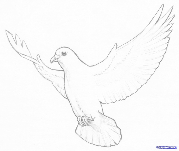 Inspiration Dove Drawings Pencil Simple Simple Dove Drawing At Paintingvalley | Explore Collection Of Photos