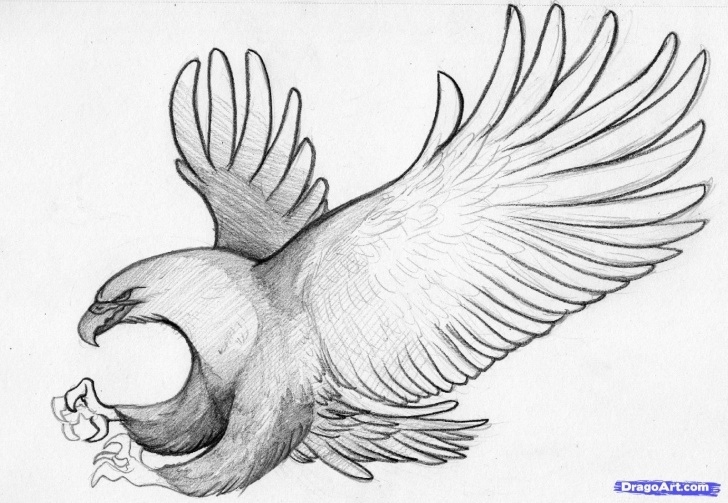 Inspiration Eagle Pencil Art Simple Easy Pencil Sketches | How To Sketch An Eagle In Pencil, Draw An Pic