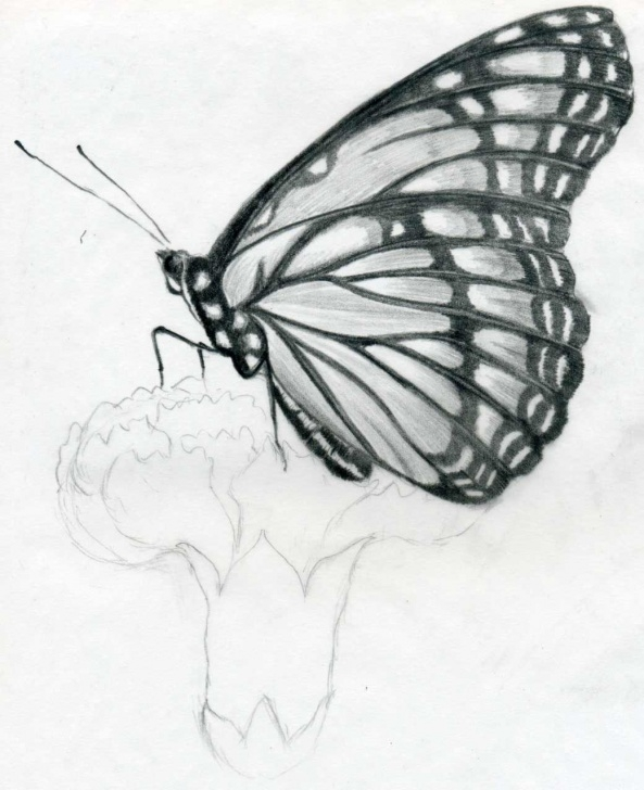 Inspiration Easy Graphite Drawings Techniques Butterfly Pencil Drawings You Can Practice Picture