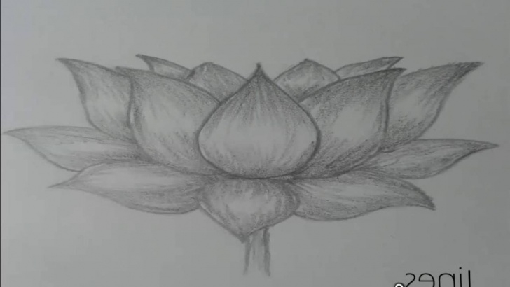 Inspiration Easy Pencil Shading Step by Step Flowers Pencil Shading Drawing And Pencil Shading Of Flower Easy Pics