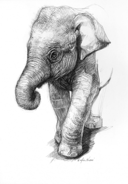Inspiration Elephant Pencil Drawing Simple Pencil Drawings Of Baby Elephants Portrait Drawings Elephant Photos