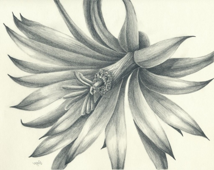 Inspiration Famous Observational Drawing Artists Simple Flower Drawing Artists Famous Pencil Drawing Artists Drawing Artisan Picture