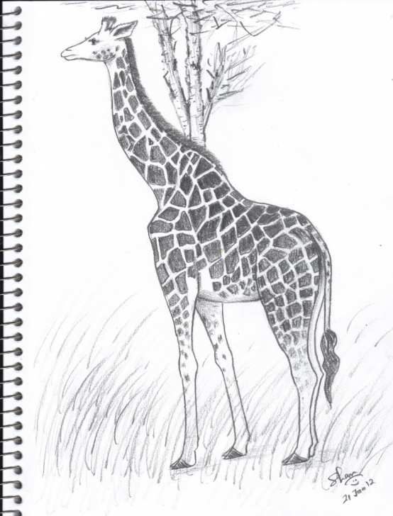 Inspiration Giraffe Pencil Drawing Lessons Giraffe Pencil Drawing At Paintingvalley | Explore Collection Of Photos