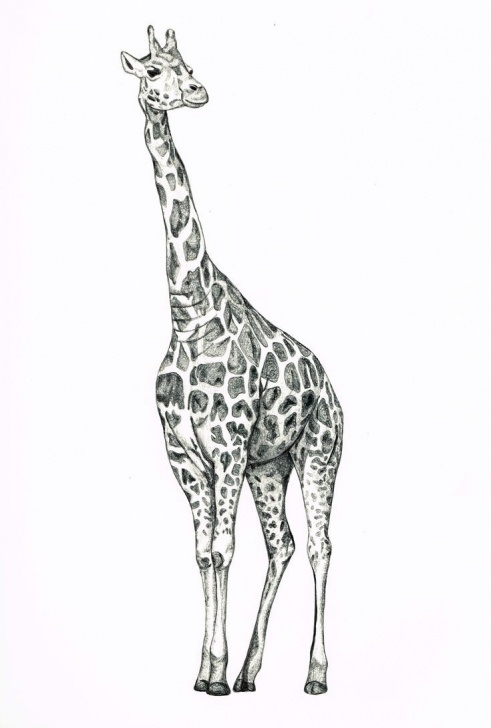 Inspiration Giraffe Pencil Drawing Tutorial Image Result For Giraffe Pencil Sketch | Sketches | Giraffe Drawing Pic