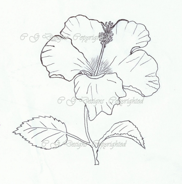 Inspiration Hibiscus Pencil Drawing Tutorials Pencil Sketch Of Hibiscus Flower And Hibiscus Flower Pencil Drawing Photo