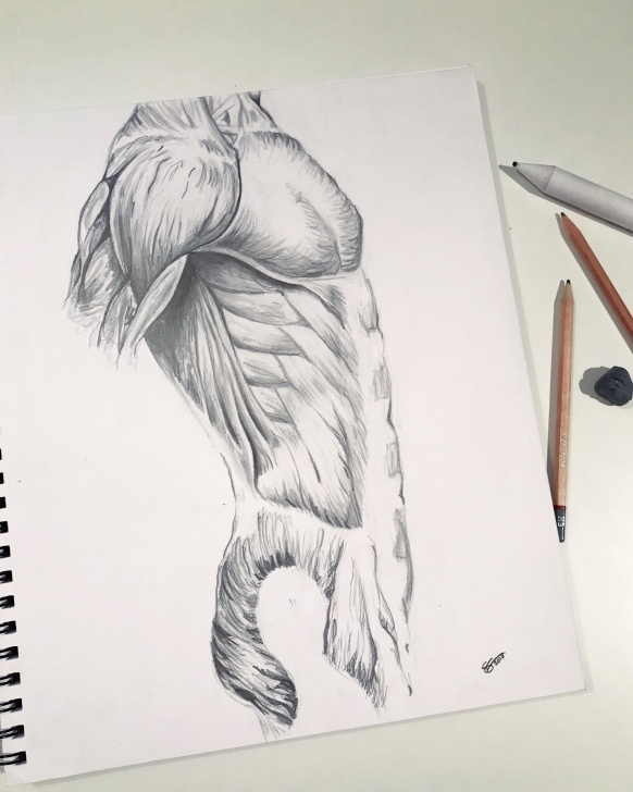 Inspiration Human Body Pencil Sketch Tutorials Human Body Drawing Done Last Year In Pencil : Drawing Photo