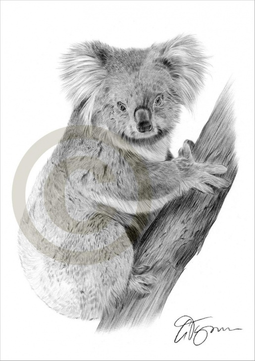 Inspiration Koala Pencil Drawing Simple Koala Bear Pencil Drawing Print - Animal Art - Artwork Signed By Artist  Gary Tymon - Ltd Ed 50 Prints Only - 2 Sizes - Pencil Portrait Pictures