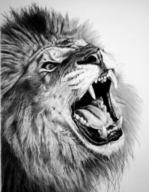 Inspiration Lion Pencil Art Tutorials Framed Print - Pencil Sketch Of A Roaring Lion (Picture Poster Photo
