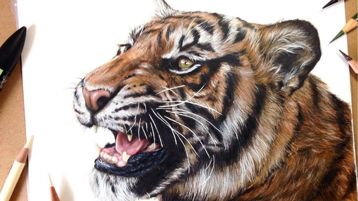 Inspiration Marker And Colored Pencil Drawing for Beginners How To Draw A Realistic Tiger | Marker + Coloured Pencil Drawing Image