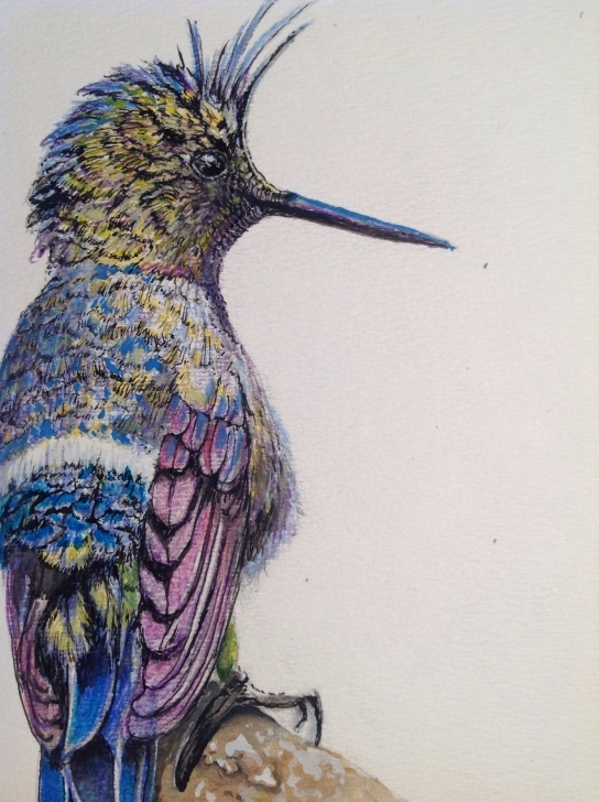 Inspiration Pencil And Watercolor Free Wire-Crested Thorntail Colored Pencil And Watercolor (For Sale See Pictures