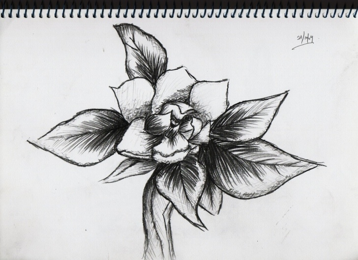 Inspiration Pencil Work Drawing Easy Pencil-Work By Yingling Tan At Coroflot Pics