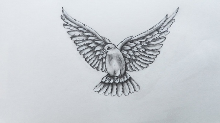 Inspiration Pigeon Pencil Sketch Free How To Sketch Pigeon Pictures