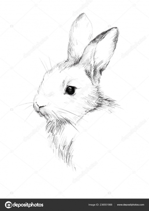 Inspiration Rabbit Sketch In Pencil Free Sketch Rabbit Small Furry Pet Pencil Sketch — Stock Photo Photo