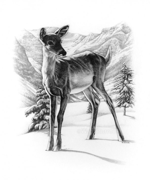Inspiration Reindeer Pencil Drawing Simple Pin By Kay Ann Criswell On Art | Pencil Drawings, Reindeer Drawing Image