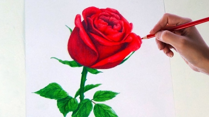 Inspiration Rose Drawing Colour Courses Drawing A Rose Flower With Simple Colored Pencils | Picture