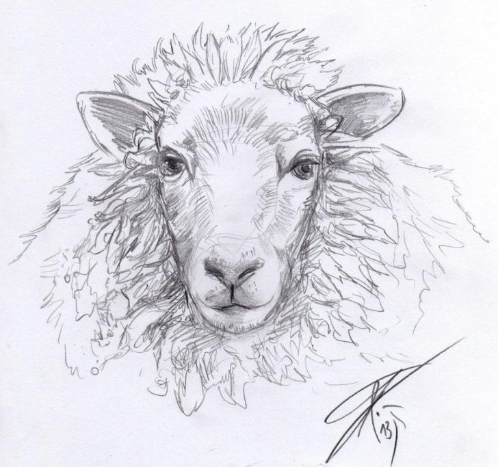 Inspiration Sheep Pencil Drawing Step by Step I Think Sheep Heads Have Something Relaxing. Cc-By … | Sheep Picture