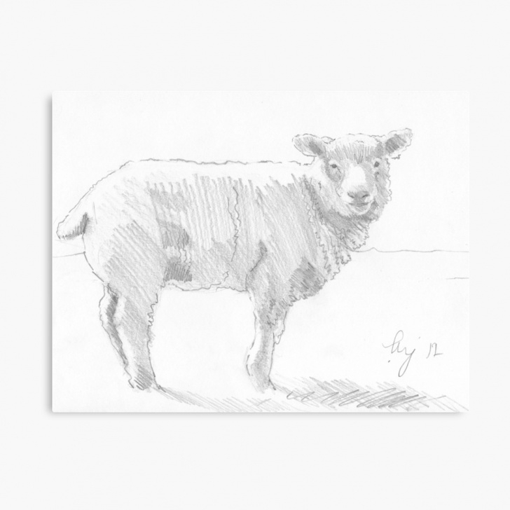 Inspiration Sheep Pencil Drawing Techniques Sheep Pencil Drawing | Canvas Print Pics