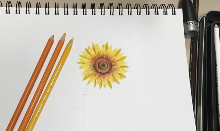 Inspiration Sunflower Colored Pencil Lessons Learn To Draw A Sunflower With Colored Pencils Picture