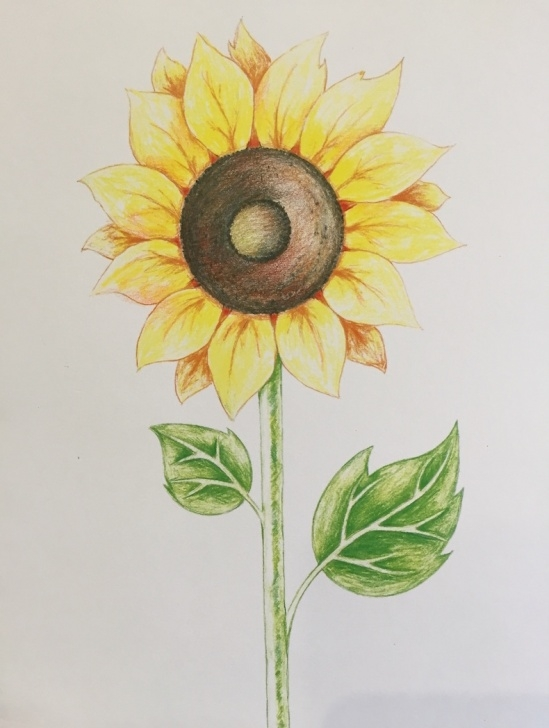 Inspiration Sunflower Colored Pencil Tutorial Main Avenue Galleria - Drawing A Sunflower With Colored Pencils Pics