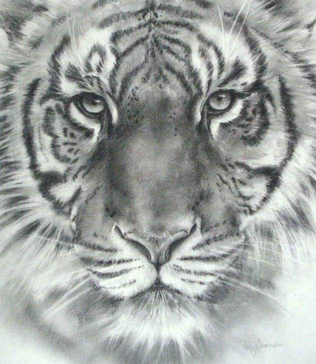 Inspiration Tiger Face Drawing Pencil Easy Tiger Face Sketch At Paintingvalley | Explore Collection Of Images