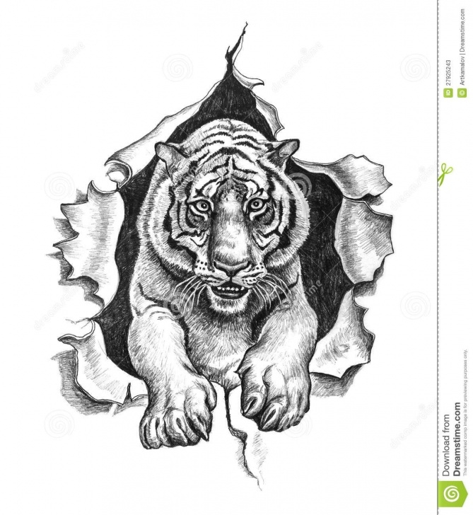 Inspiration Tiger Pencil Art Free Pencil Drawing Of A Tiger Stock Illustration. Illustration Of Edge Picture