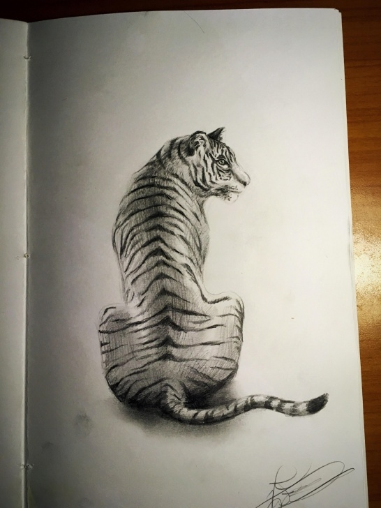 Inspiration Tiger Pencil Drawing Ideas Pencil Sketch Of A Tiger. To Me It Looks Okay From A Distance But Pic