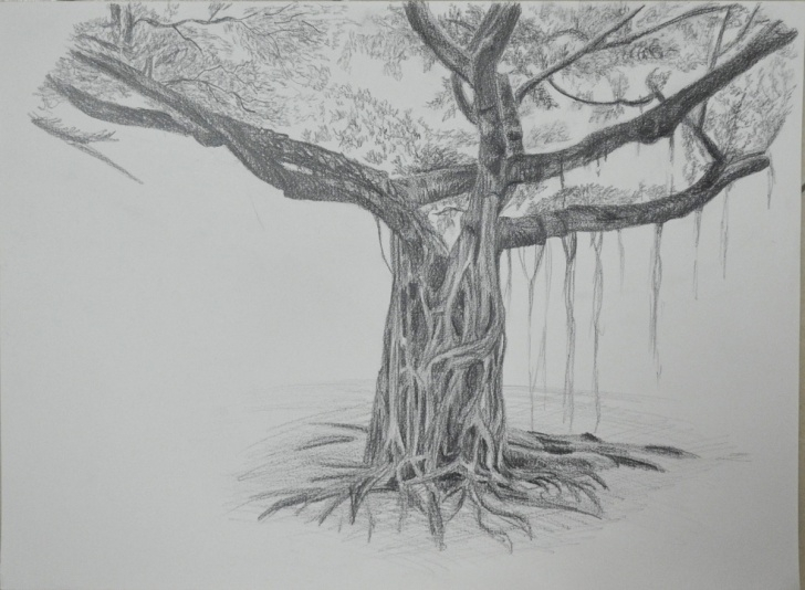 Inspiration Tree Pencil Sketch Tutorial Banyan Tree Sketch At Paintingvalley | Explore Collection Of Pic