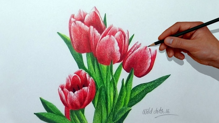 Inspiration Tulip Drawings In Pencil Free How To Draw A Flower With Simple Colored Pencils - Tulip | Pic