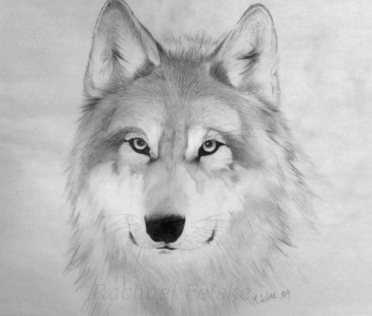 Inspiration Wolf Drawings In Pencil Techniques Wolf Drawings - Wolves In Pencil, Pastel And Charcoal By Various Photo