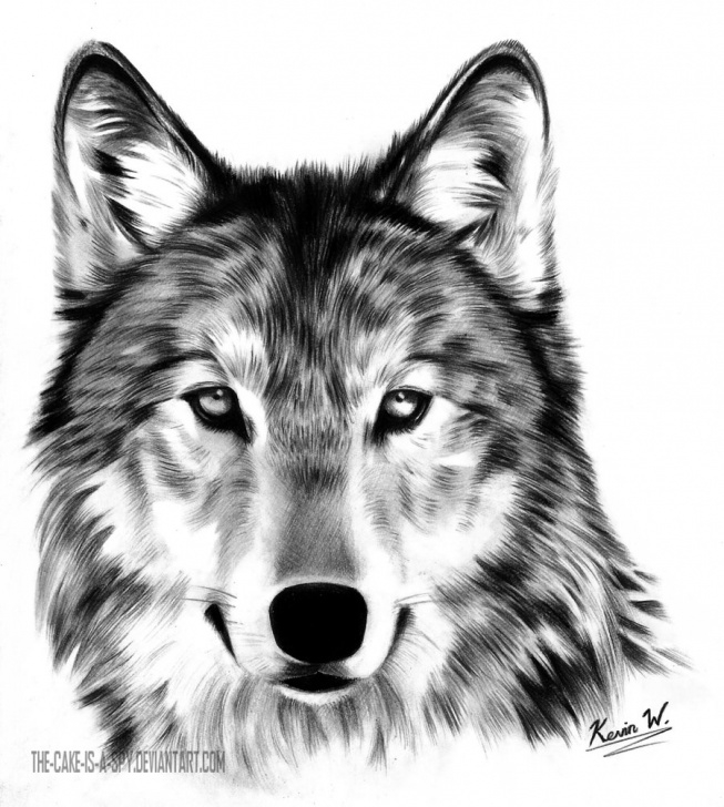 Inspiration Wolf Pencil Sketch Tutorial Wolf Pencil Sketch At Paintingvalley | Explore Collection Of Picture