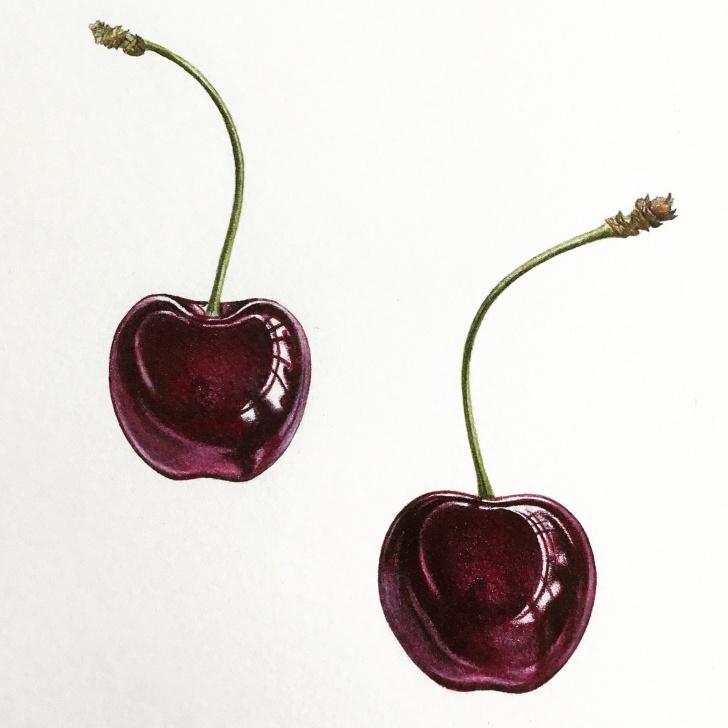 Inspiring Ann Swan Botanical Artist Simple Creative Colour Mixing At Nature In Art - Ann Swan Photos