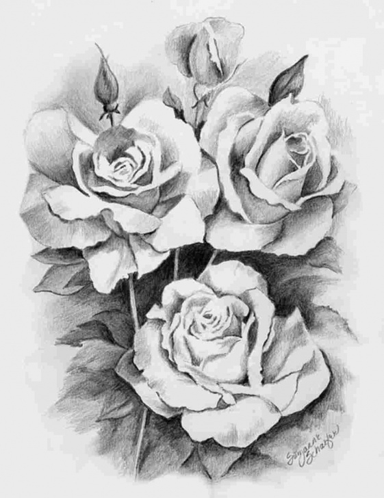 Inspiring Beautiful Pencil Sketches Of Roses Free Beautiful Flower Realistic Pencil Drawings Rose Drawing Photos