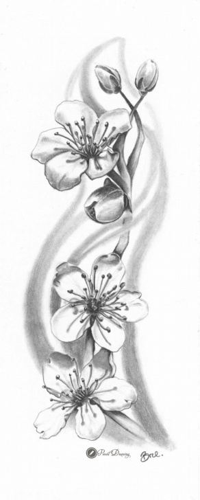 Inspiring Cherry Blossom Pencil Drawing Tutorials Cherry Blossom – Sakura Drawings With Pencil (Part2) | Tattoos Photos