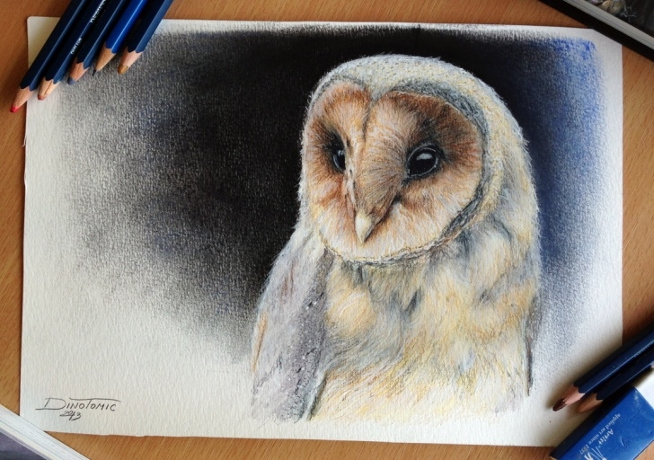 Inspiring Colored Pencil Animals Easy Pencil Drawings: Colored Pencil Drawings Of Animals Pictures