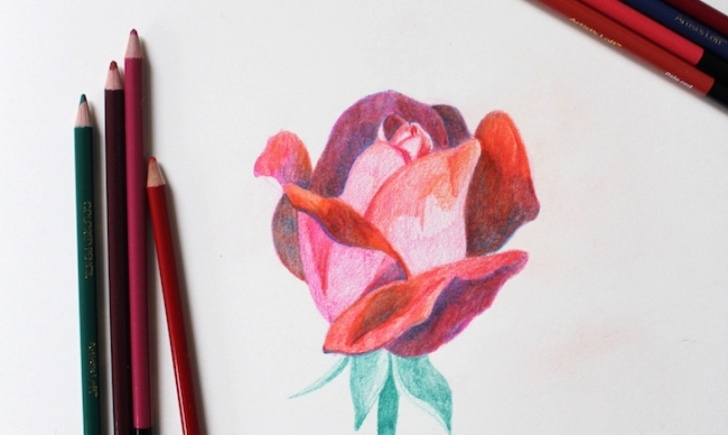 Inspiring Colored Pencil Rose Free Learn To Draw This Rose, Step By Step! Pics