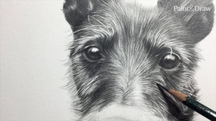Inspiring Dog Pencil Drawing Courses Draw A Pencil Pet Portrait Photo