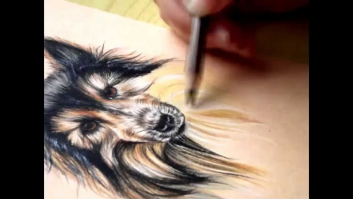 Inspiring Drawing Animals In Colored Pencil Free How To Draw Fur- Colored Pencils Photos