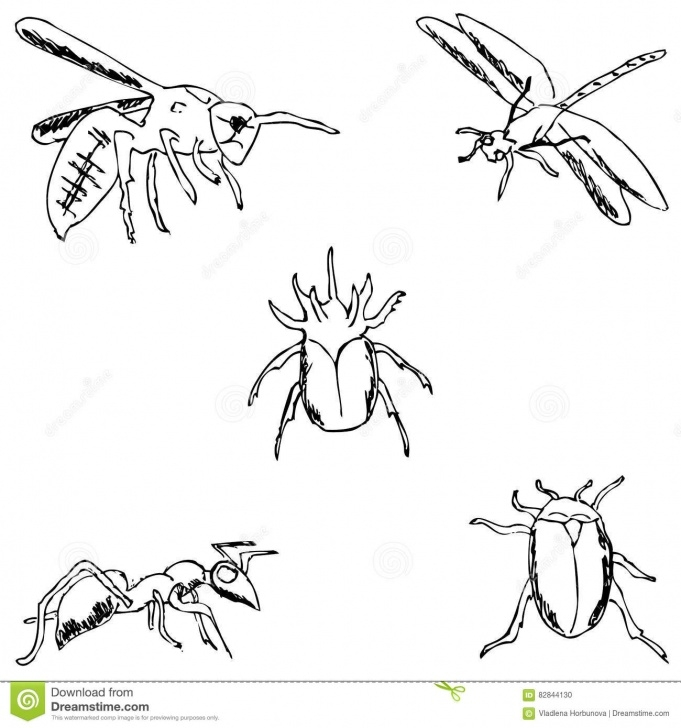 Inspiring Drawing Insects Pencil Techniques Insects. A Sketch By Hand. Pencil Drawing Stock Vector Photo
