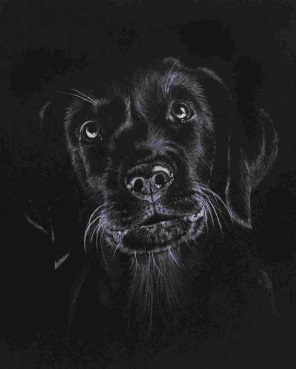 Inspiring Drawing On Black Paper With White Pencil for Beginners Easy Drawing On Black Paper With White Pencil - Gigantesdescalzos Picture